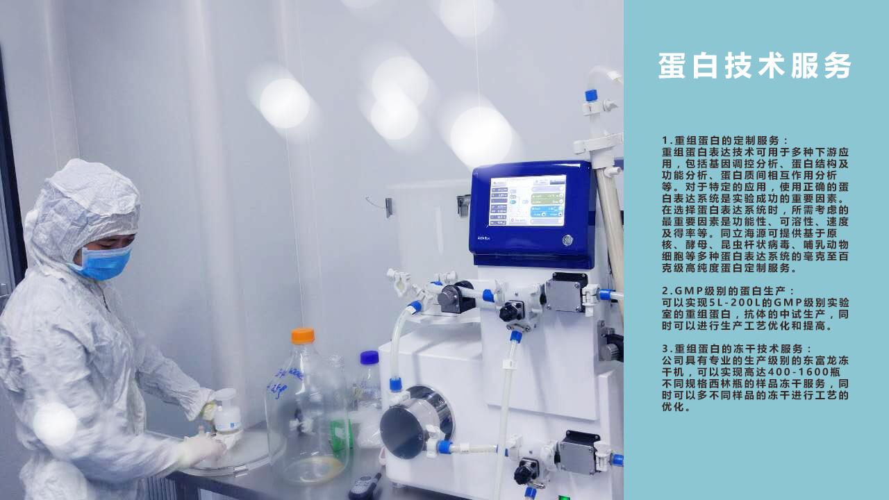 重组蛋白生产、制备、开发