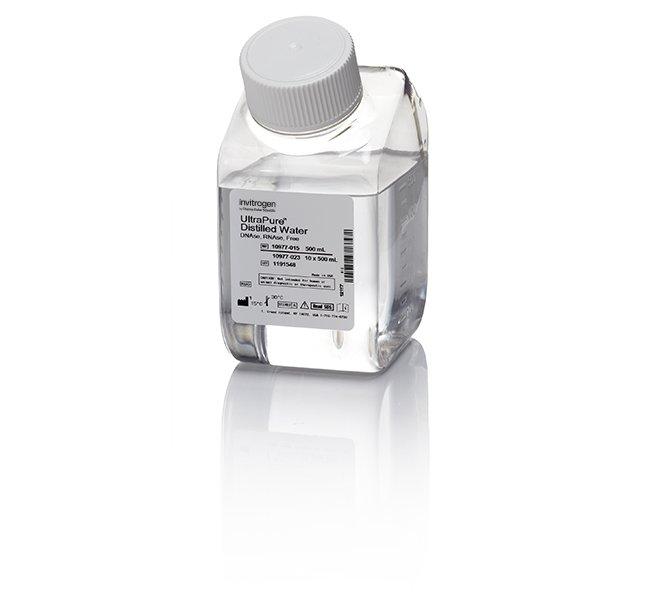 去核酸酶水