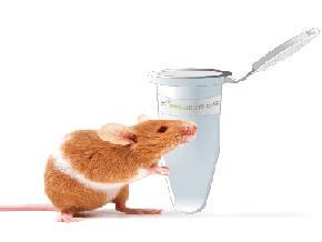 KAPA 小鼠分型试剂