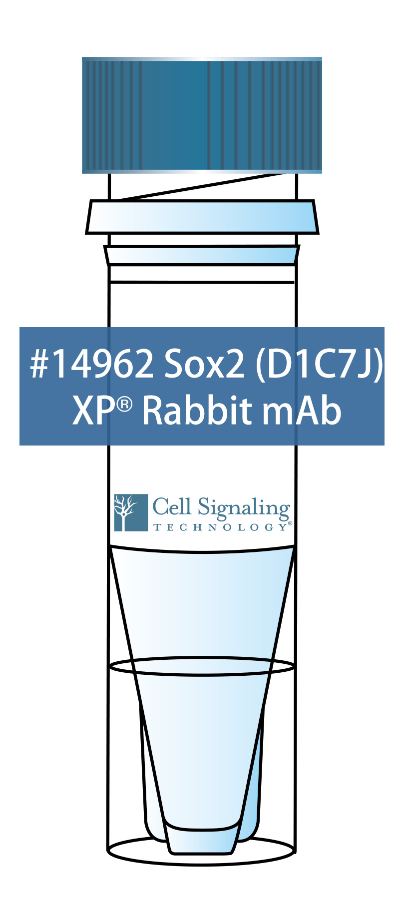 Sox2 (D1C7J) XP® Rabbit mAb
