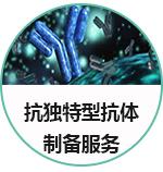 抗独特型抗体开发服务