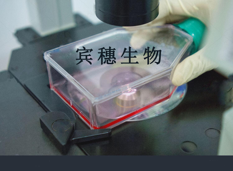 SW900人肺癌细胞系 专业传代培养技术指导