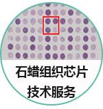 组织芯片定制
