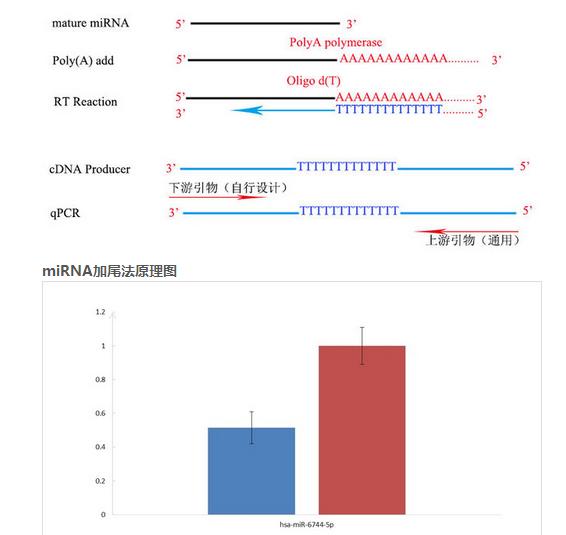 miRNA实时荧光定量PCR检测
