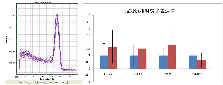 mRNA實時熒光定量PCR檢測