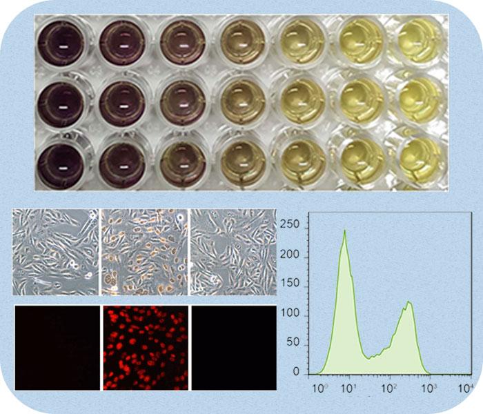 细胞增殖检测
