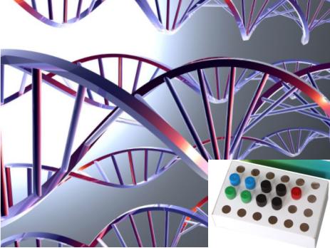 札如病毒单重荧光PCR检测试剂盒