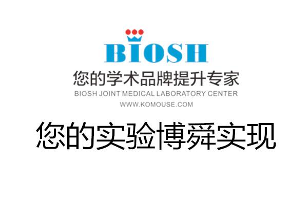蛋白质免疫印迹(Western Blot )