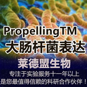 随心所欲驾驭大肠杆菌表达系统PropellingTM