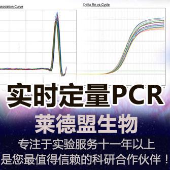 实时定量PCR(rtPCR)