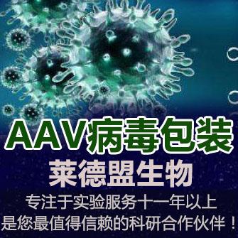 腺相关病毒 AAV病毒包装(高纯浓缩)