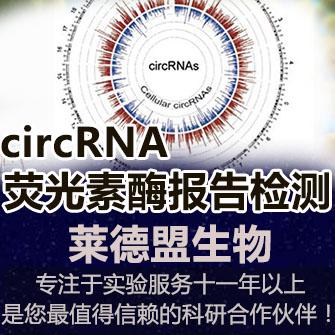 cirRNA荧光素酶报告检测(环状RNA)