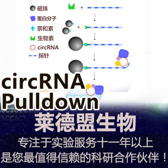 circRNA Pulldown(環狀RNA)