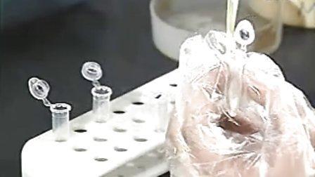 質粒DNA提取