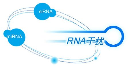 miRNA提取及反转录