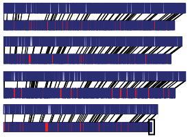 真菌基因组de novo测序