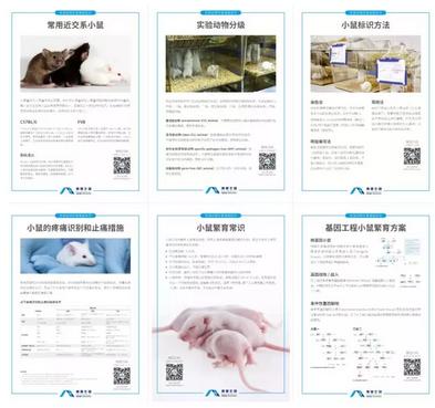 《小鼠饲养繁育科普知识》海报免费申请