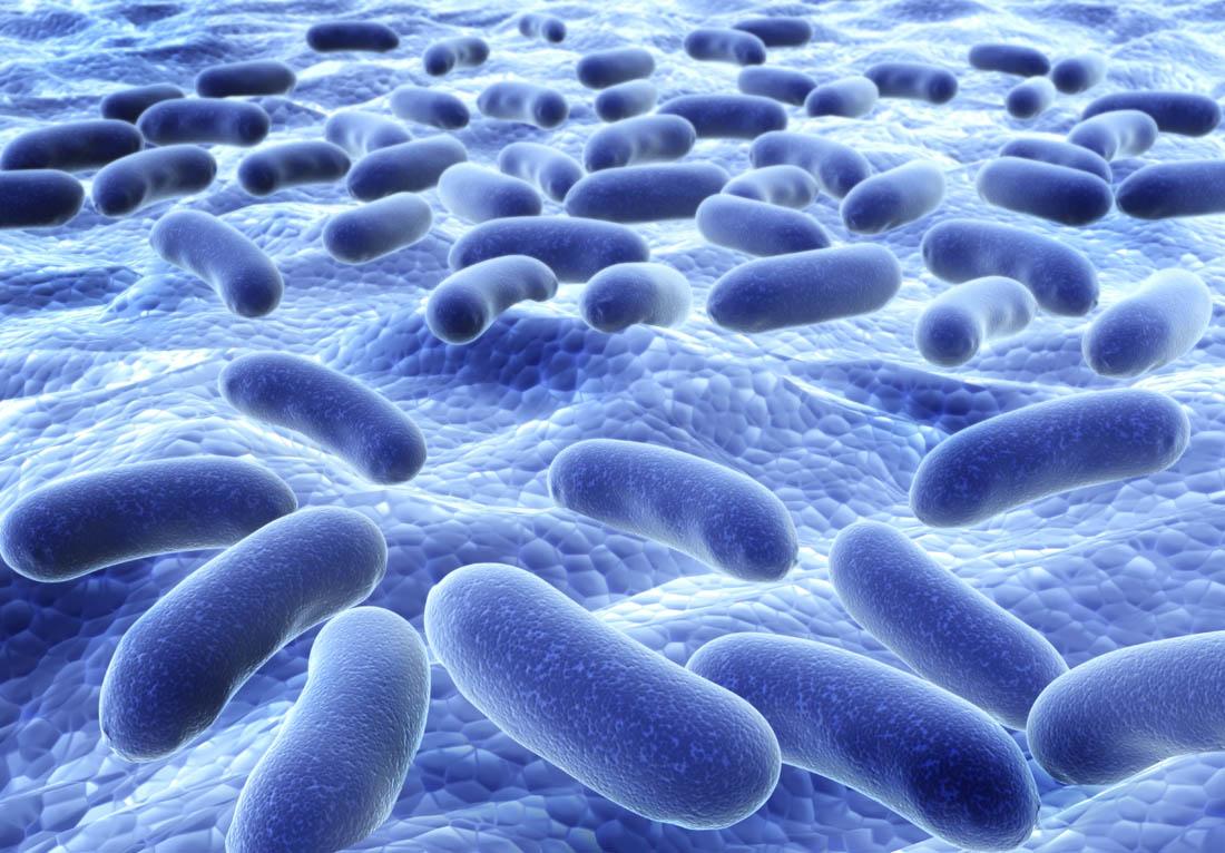 微生物重測序