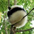 熊猫医生啊