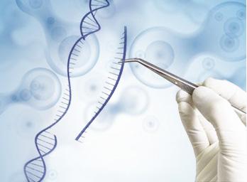基因点突变细胞定制