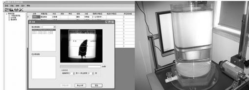 悬尾测试仪,大小鼠悬尾视频分析系统,悬尾实验视频分析系统