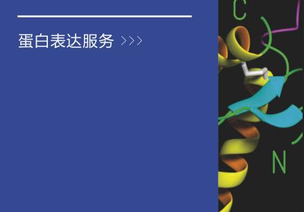 质粒构建及蛋白表达服务
