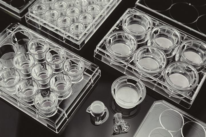 细胞小室,PET膜,TC处理