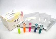 偶联二抗-免疫荧光成像探针
