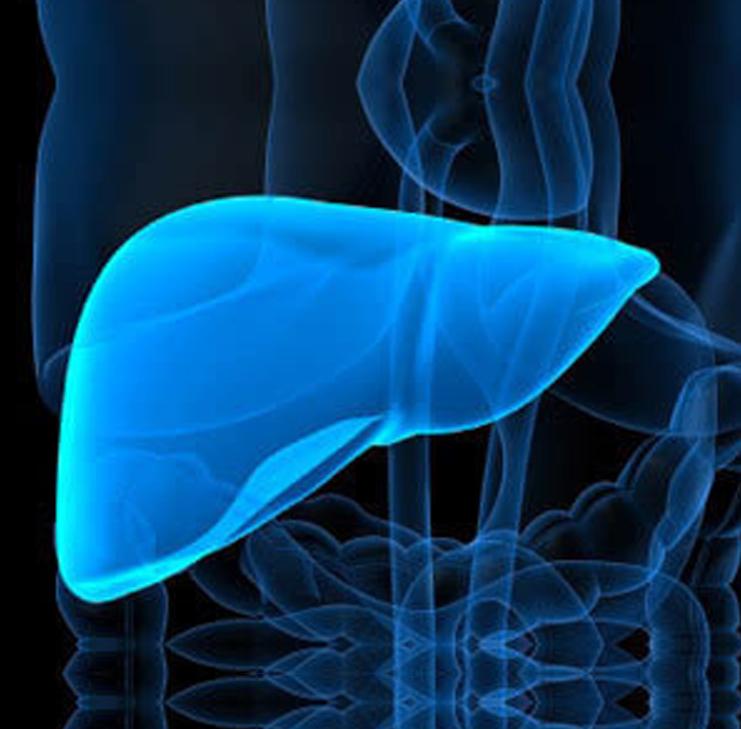 赛贝人源肝脏细胞