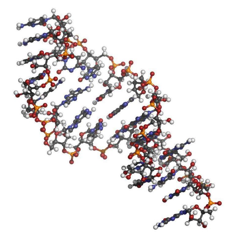 分子生物学级糖原溶液,10mg/mL1mL规格