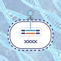 结核分枝杆菌基因敲除、回补及过表达技术服务Rv/Ra/BCG/耻垢/海分枝