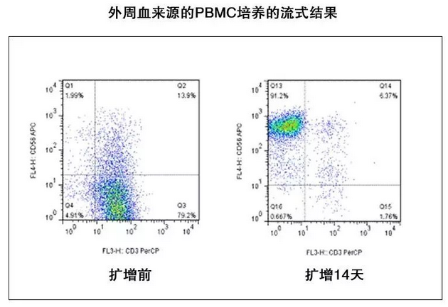 外周血来源的PBMC培养的流式结果