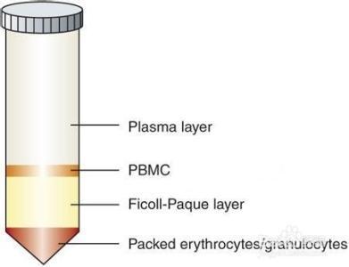 单个核细胞(PBMC)(Lab Grade)