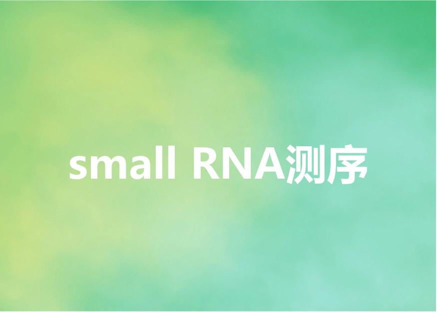 small RNA测序-欧易生物