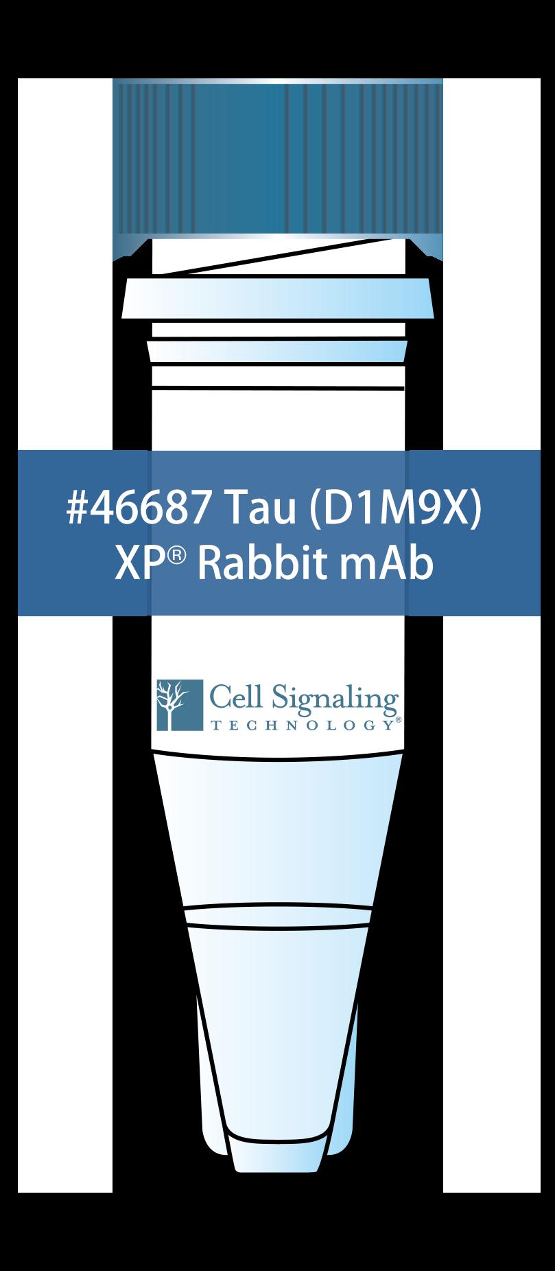 Tau (D1M9X) XP® Rabbit mAb