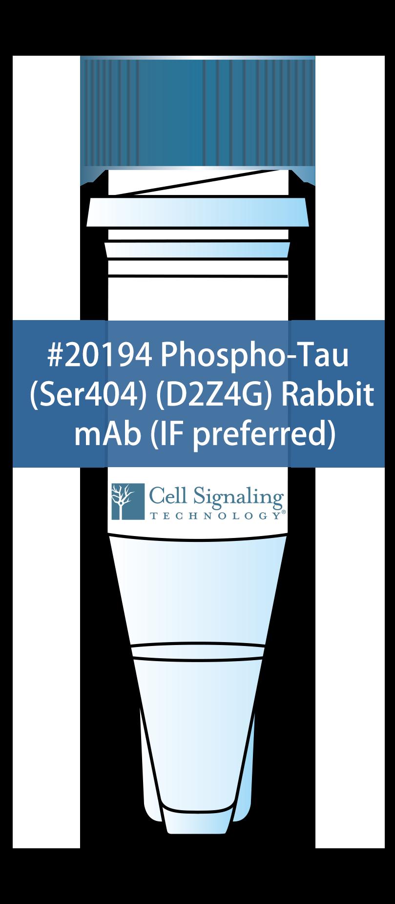 Phospho-Tau (Ser404) (D2Z4G) Rabbit mAb (IF preferred)