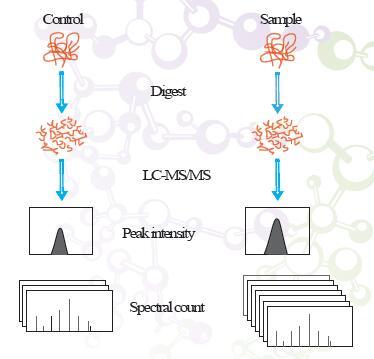 非标(Label-free)定量蛋白质组学实验