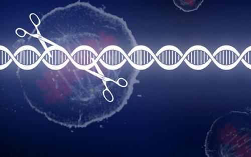 CRISPR基因编辑稳定细胞株构建