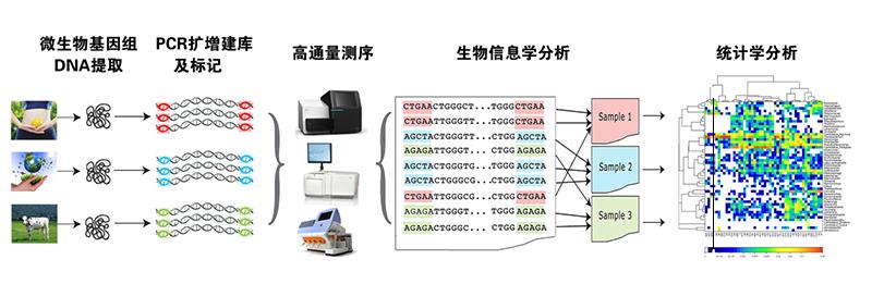 16S/18S/ITS微生物测序