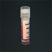 少突胶质细胞髓磷脂糖蛋白 MOG35-55  EAE 模型 现货