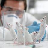动物模型构建实验服务