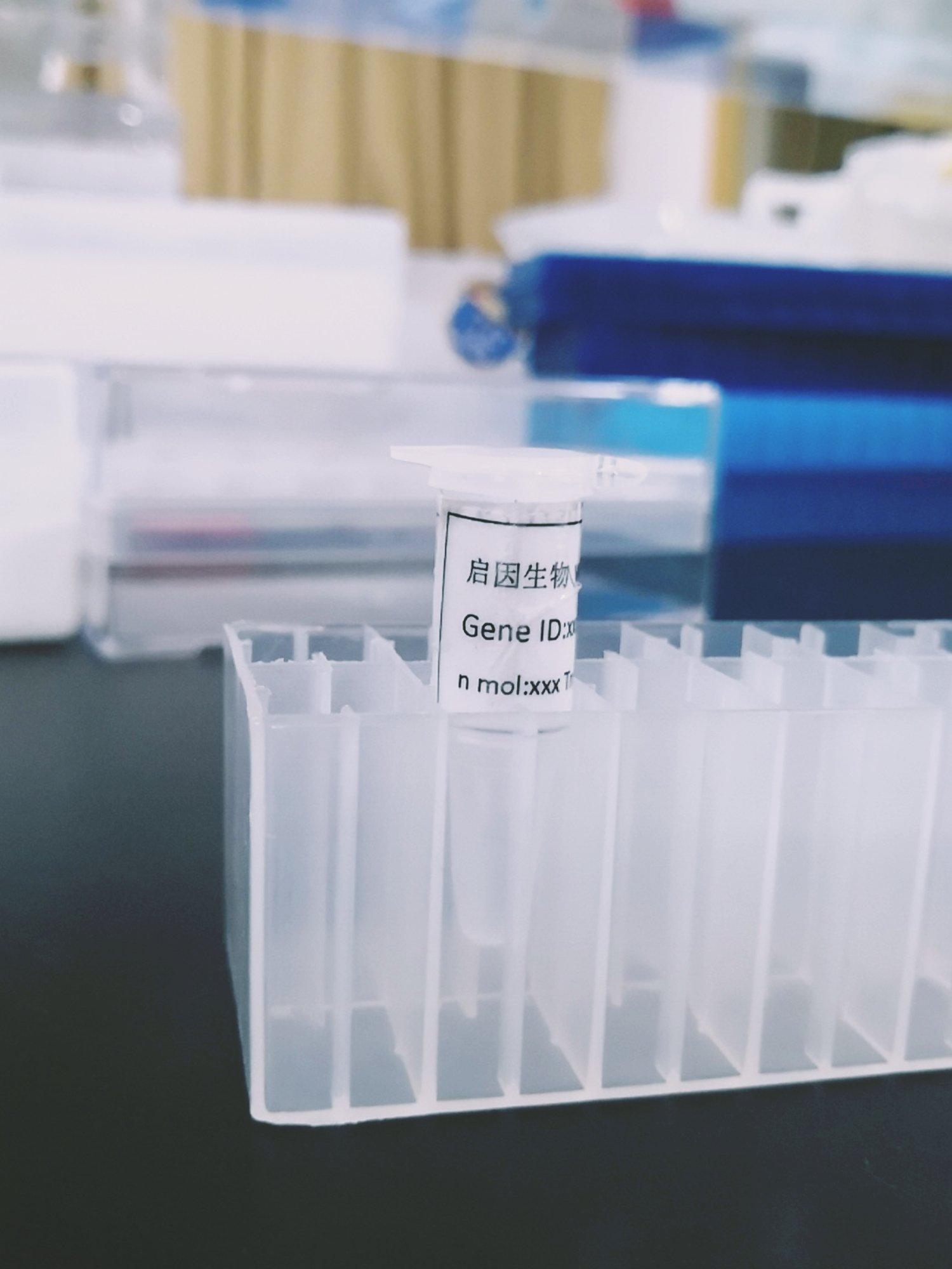 human-IDH1-定量PCR引物