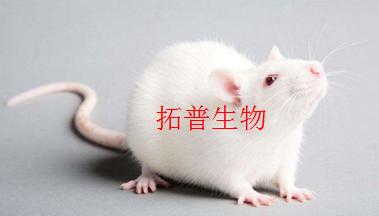 疾病模型/實驗動物造模/裸鼠成瘤服務