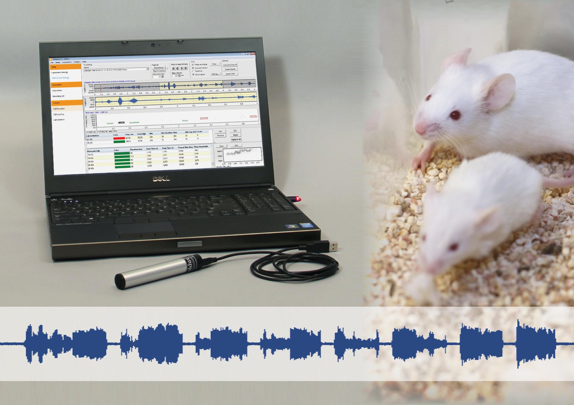 UltraVox声音行为分析系统