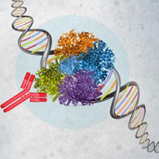 染色质免疫沉淀