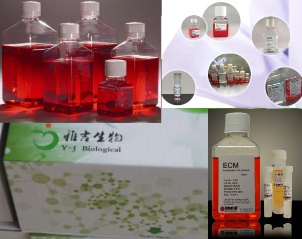 大小鼠人DNaseI免疫组化试剂盒