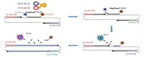 玉米35S/MS RT-PCR检测试剂盒哪里有卖