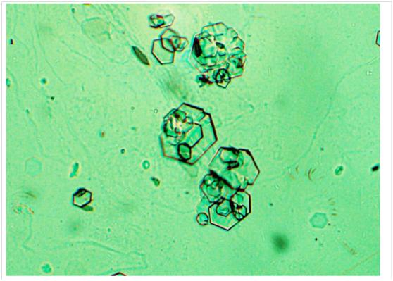 结晶图-11.png