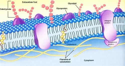 膜蛋白酵母双杂交文库构建技术服务