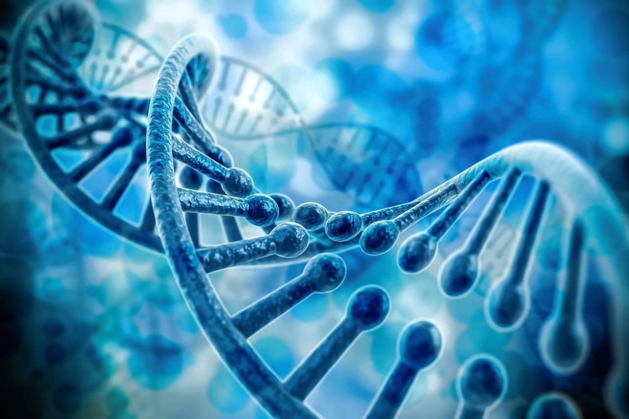 基因组酵母双(单)杂交文库构建